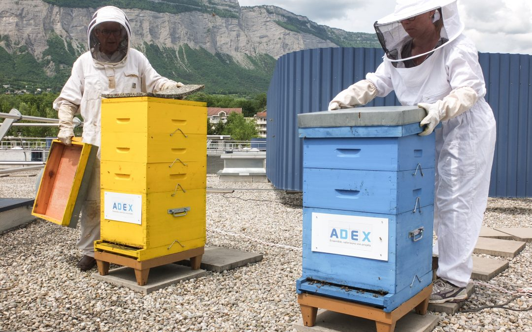 Bee Abeille dans les Affiches de Grenoble et du Dauphiné