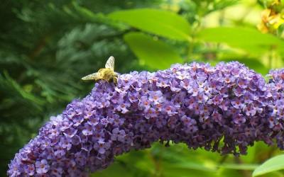 Le déclin des abeilles – C'est pas sorcier France3