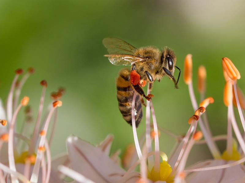 Communiquez avec vos Clients, l'apiculture 2.0