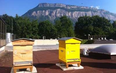 Bee Abeille dans le Dauphiné Libéré