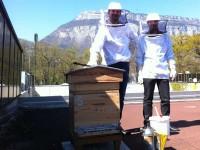Hipcom Realiss 1ere visite du rucher