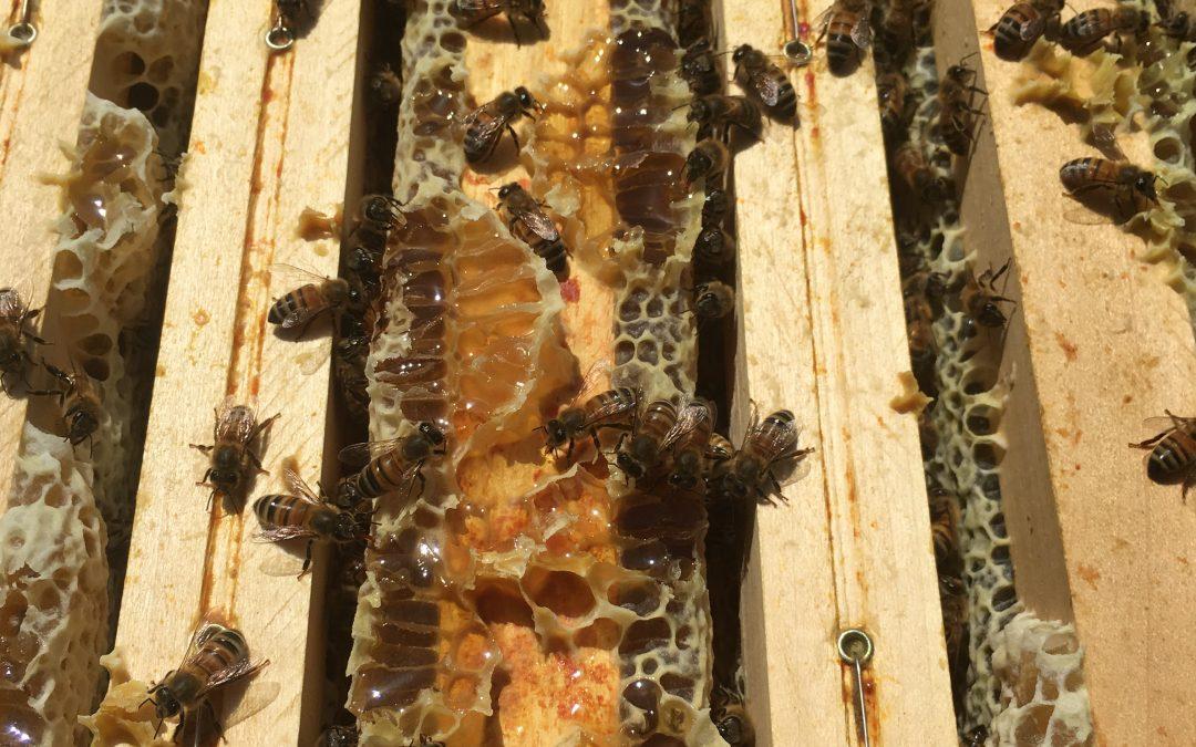 Adex – un début de saison apicole exceptionnel
