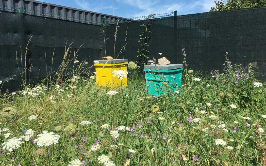 Apiculture urbaine : le cadre législatif des ruches en entreprise