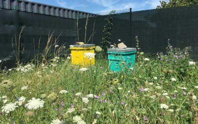 Le cadre législatif des ruches en entreprise