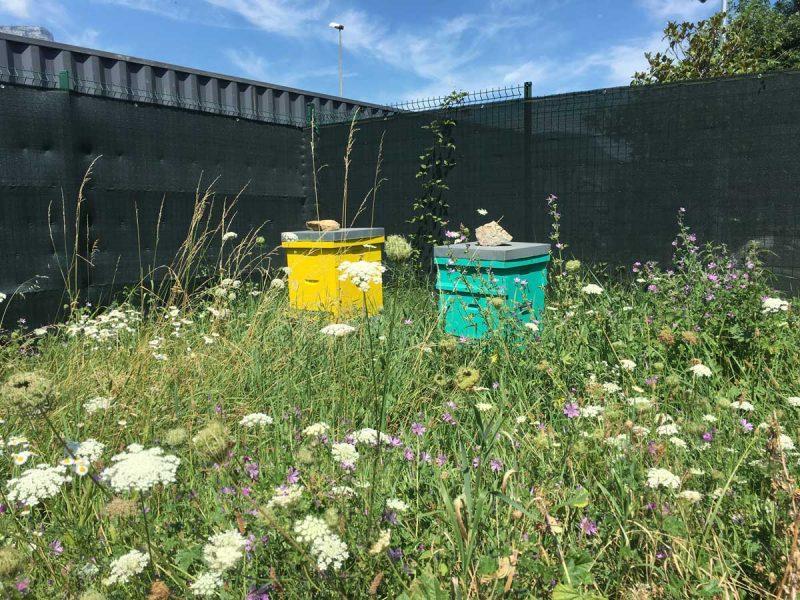 Bee Abeille ruches en entreprise - Carrefour St Egreve