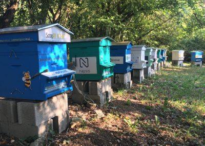Parrainage de ruche sur le rucher Bee Abeille à Claix