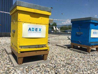 Bee Abeille ruches en entreprise - ADEX