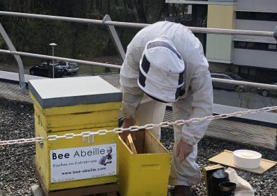 Division d'une ruche