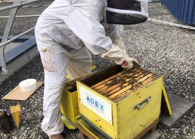 Ouverture de la ruche ADEX