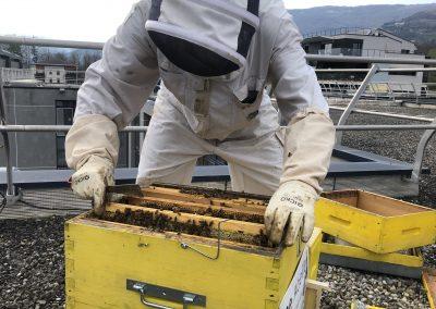 visite des abeilles