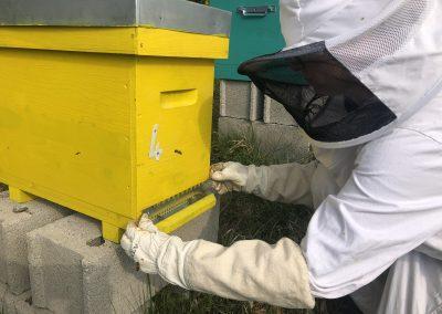 Libération des abeilles