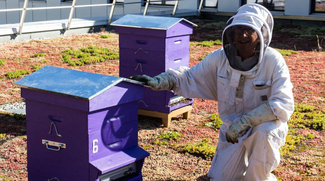 Un bel article sur Bee Abeille