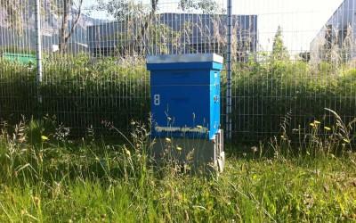 Une ruche de Bee Abeille à Crolles