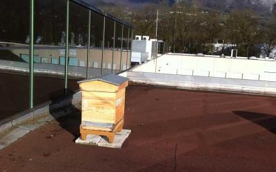 Une ruche de Bee Abeille installée à Inovallée