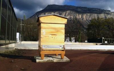Installation de la ruche sur le toit des entreprises Hipcom et Realiss