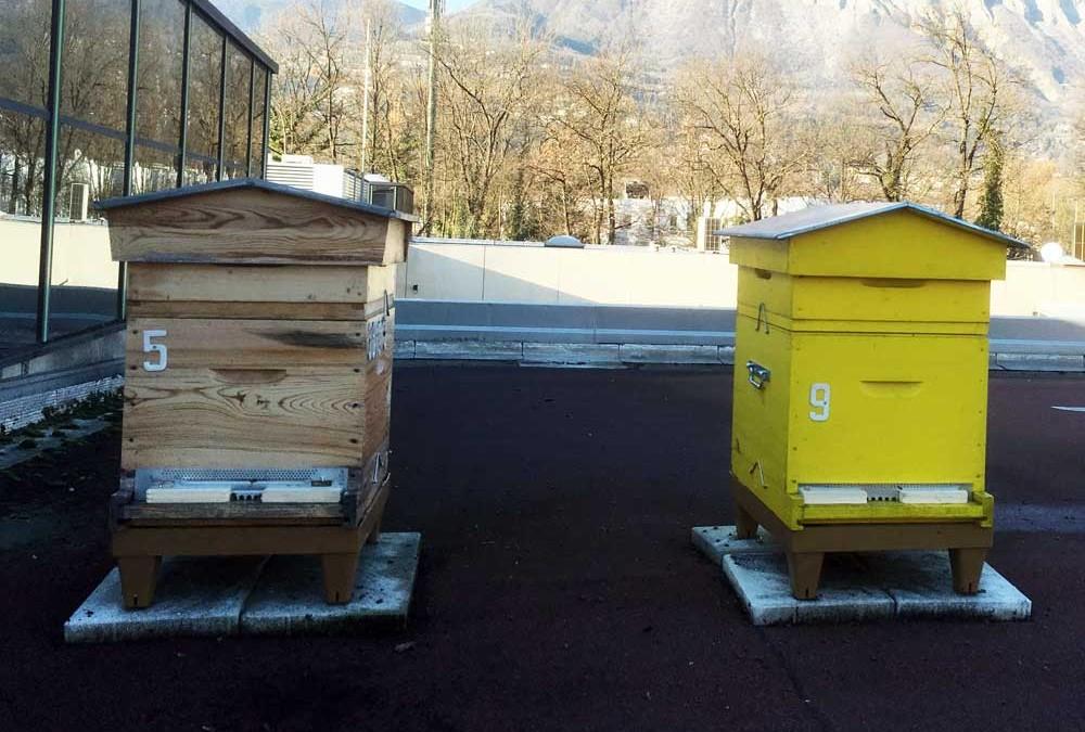 Hivernage des ruches