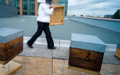 Accueillez une ruche en entreprise