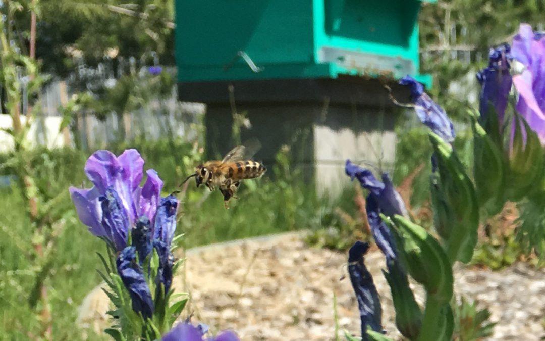 A Grenoble, abeilles et orchidées font bon ménage