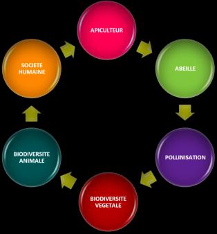 Le cycle de la biodivsersité
