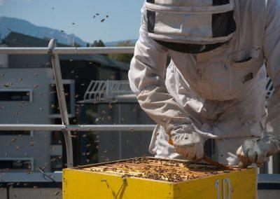 Bruno Gerelli - Bee Abeille ruches en entreprise - ADEX