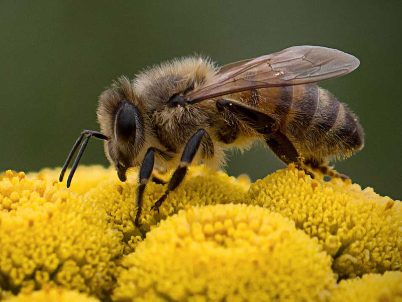 Récolter le miel et l'offrir
