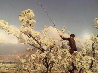 pollinisation-a-la-main