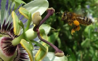 Préserver la biodiversité, un plus pour votre démarche RSE